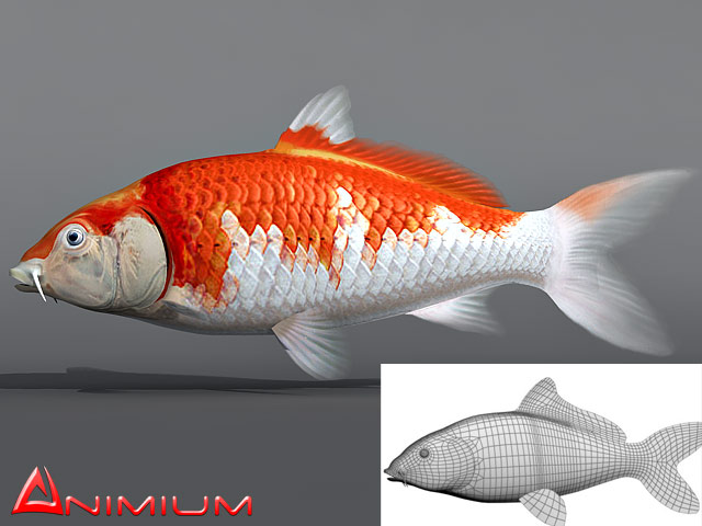 Koi fish 3d collection free 3d models for Koi fish images
