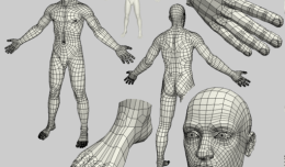 Male 3d character mesh