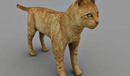 cat free 3d model