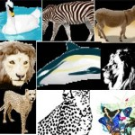Vectors – Animal Pack 1