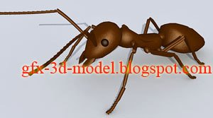 Ant animal model