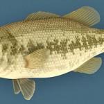 Fish03