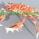 Crab – animal model