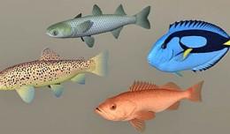 fish_coll