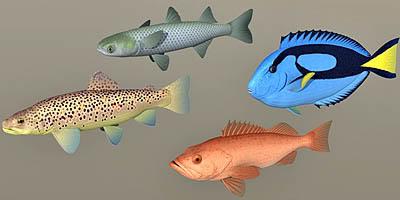 Fish_coll01