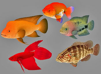 Fish Collection 08