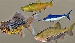 fish_coll1
