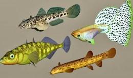 fish_coll2