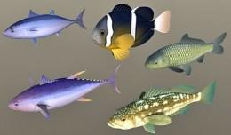fish_coll4