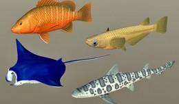 fish_coll5