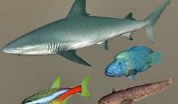 fish_coll6