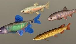 fish_coll7