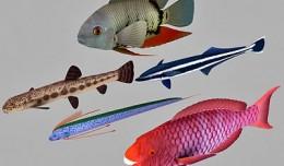fish_coll8
