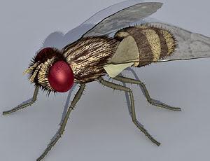Fly Animium 3d Models