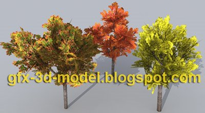 Maple Tree Model