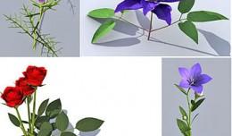 plant_coll1