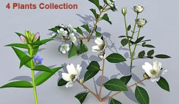 plant_coll3