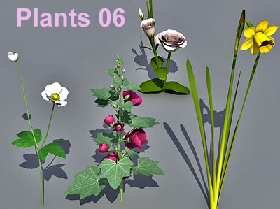 Plant Collection 06