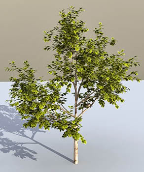 Tree – Animium 3D Models