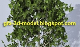 tree_hr