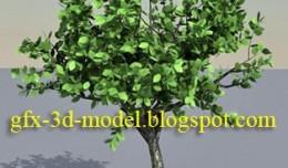 tree_season