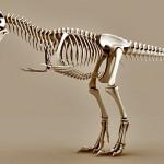 Tyrannosaurus Rex skeleton free 3d model