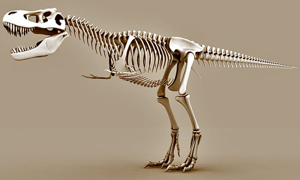 Tyrannosaurus Rex skeleton free