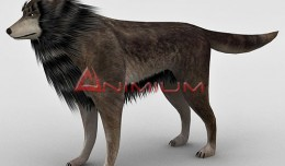 Wolf 3d model render