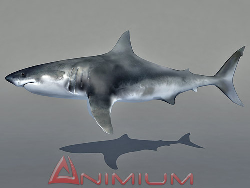 3D models Shark | Free 3D Models for Maya and 3DS MAX