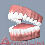3d models Teeth and Tongue
