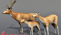 Deer doe and fawn 3d model