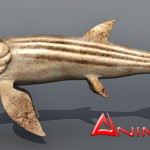 Leedsichthys 3d model