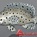 Humpback grouper 3d model