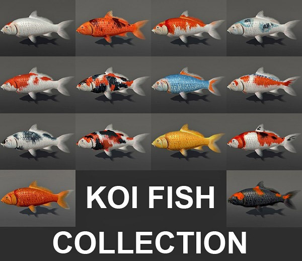 Koi fish collection