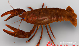 Crayfish 3d model