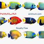 Angel Fish 3d model collection