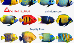 angelfish 3d model collection