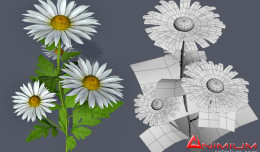 Chrysanthemum-3d-model