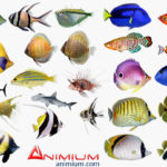 Tropical fish 3d model collection