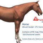 Horse 3d model – Zbrush Sculpt
