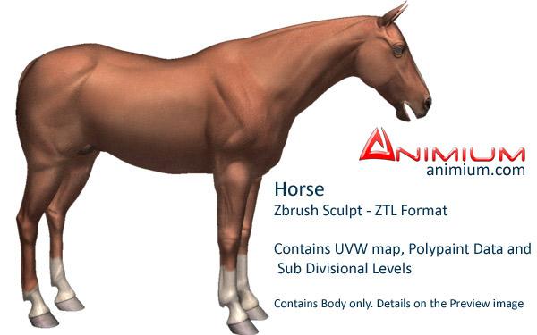 Horse – Zbrush Sculpt