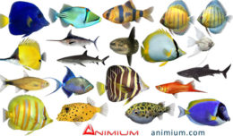 Tropical fish 3d models