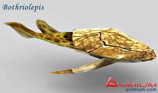 Bothriolepis 3d model