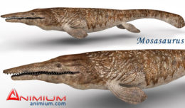 Mosasaurus 3d model