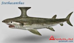 Stethacanthus 3d model