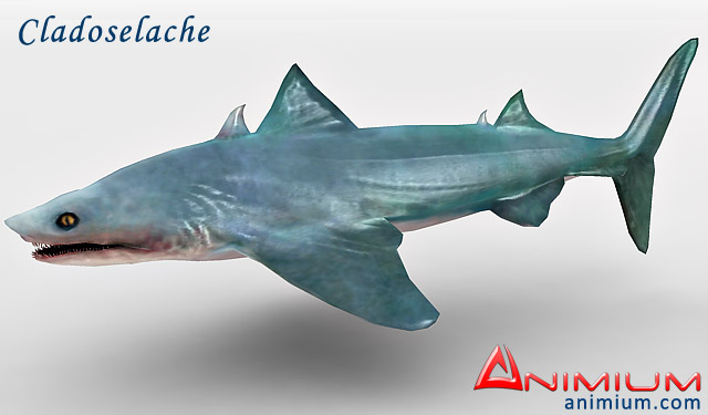 Cladoselache 3d model – Animium 3D Models