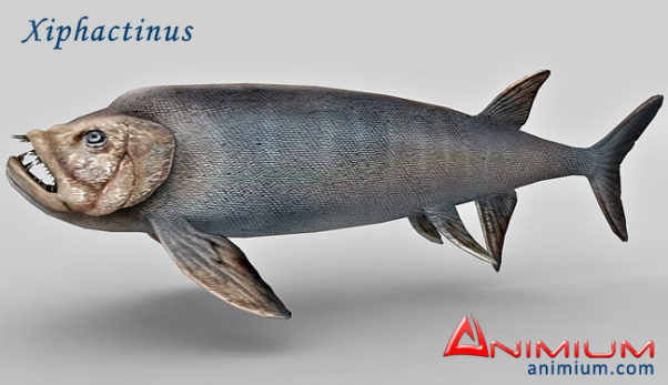 Xiphactinus 3d model