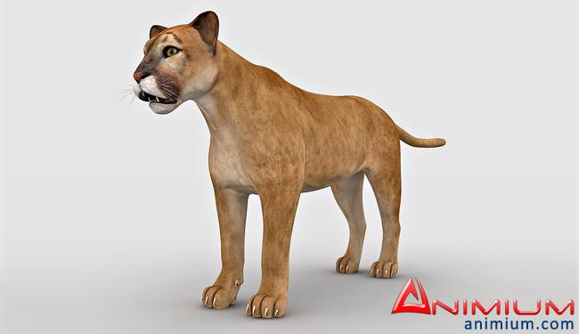 Mountain Lion 3d model