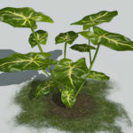 Arrowhead plant 3d model