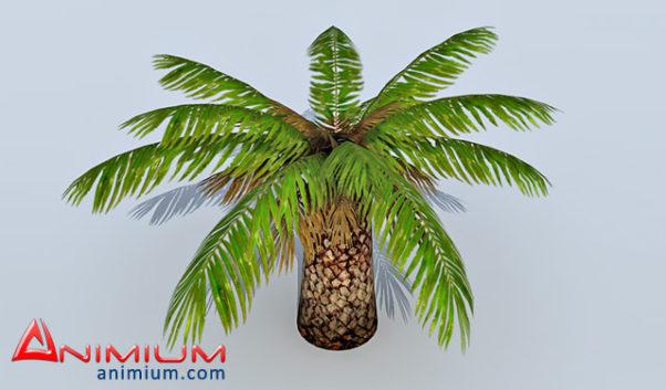 Palm Tre 3d model